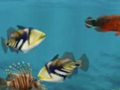3D Aquarium Live Wallpaper HD 1.0 Screenshot