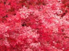 3D Autumn Leaf Live Wallpaper 1.0 Screenshot