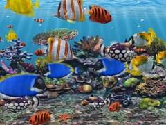3D Fish School Screensaver 4.994 Screenshot