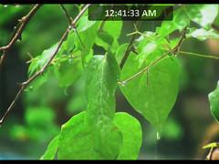 3D Green Rain ScreenSaver 2.1.0 Screenshot