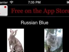 3Strike Cats 1.2.3 Screenshot