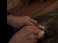 Adorable cat videos 1.0 Screenshot