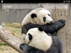 Adorable Pandas Live Wallpaper 3.6.0.0 Screenshot