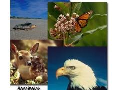 Amazing Animals Screen Saver 1.11 Screenshot
