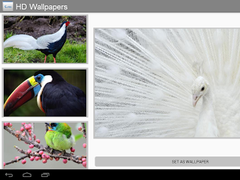Amazing Birds HD Wallpapers 2.0 Screenshot