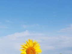 Amazing Flower Garden Wallpaper Backgrounds: FREE Spring Edition 1.0 Screenshot