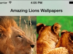 Amazing Lions Wallpapers 1.0 Screenshot