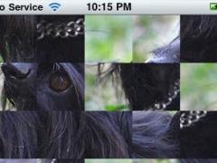 Amazing Schnauzer Dog Tap Puzzles - free edition 1.0 Screenshot