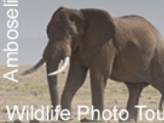 Amboseli African Safari 1.0 Screenshot