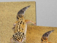 Angry Gecko Free! 1.074 Screenshot