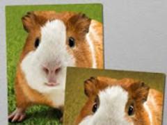 Angry Guinea Pig Free! 1.074 Screenshot