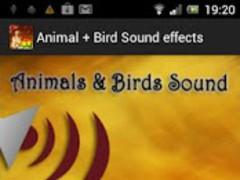 Animal + Bird Sound Effects 1.6 Screenshot