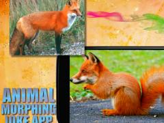 Animal face morphing photo 2.2 Screenshot