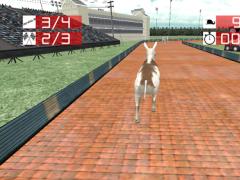 Animal Racing : Donkey 1.0 Screenshot