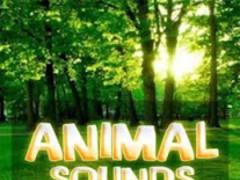 Animal Sounds for Kids (Free) 1.0 Screenshot