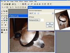 Antechinus Photo Magic 6.0 Screenshot