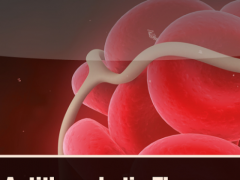 Antithrombotic Therapy 1.1.0 Screenshot