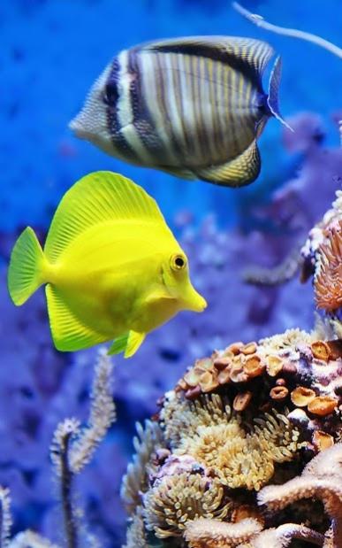 Aquarium Live Wallpaper 6.0 Free Download
