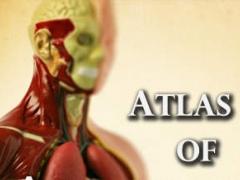 Atlas of Anatomy 1.3 Screenshot