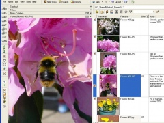 Atlast! File Notes Organizer 3.5 Screenshot