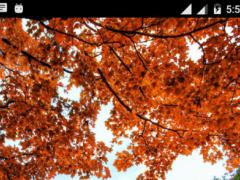 Autumn Background Wallpaper 1.1 Screenshot