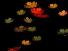 Autumn Leaves Screensaver 01 Screenshot