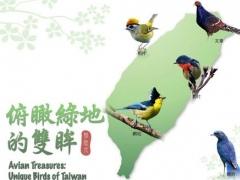 Avian Treasures:Unique Birds Of Taiwan, 1.0 Lite 1.0 Screenshot
