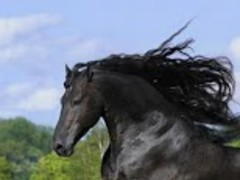 Awesome Horse Wallpaper 6.0 Screenshot