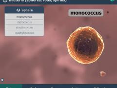 Bacteria Interactive 3D 1.5 Screenshot