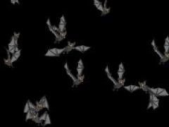 Bats Screensaver 01 Screenshot