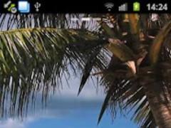 Beach Palm Tree Live Wallpaper  Screenshot