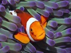 Beautiful Fish Wallpaper 7.5 Screenshot