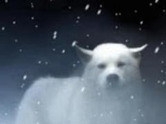 Beautiful White Wolf Live Wal 1.6 Screenshot