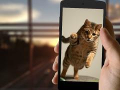 Bengal Cat Wallpaper 1.0 Screenshot