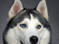 Best Dog Wallpaper 1.0 Screenshot
