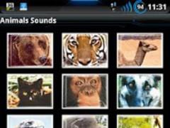 Best Real Animal Sounds Free 1.0 Screenshot