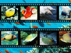 Best Sea Animals 1.4 Screenshot