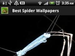 Best Spider Wallpapers 1.2 Screenshot