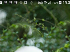 Bichon Frise Wallpaper 1.0 Screenshot