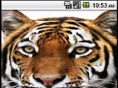 Big cats 0.0.0.5 Screenshot