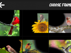 Bird Art Frames 1.1 Screenshot