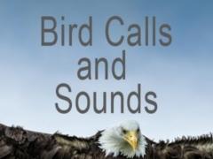 Bird Calls and Sounds 1.3.3 Screenshot