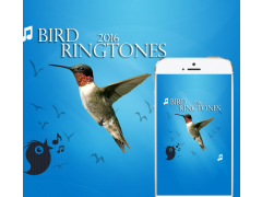 Bird Ringtones 2016 1.0 Screenshot