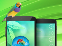 Bird ringtones & sounds 1.0 Screenshot