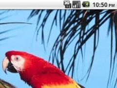 Bird Wallpaper 1.0.7 Screenshot