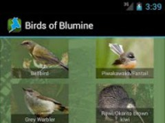 Birds of Blumine 1.0 Screenshot