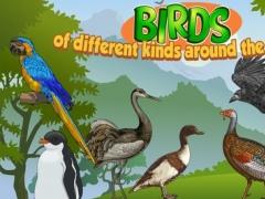 Birds of different kinds around the World 1.0.2 Screenshot