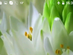 Birth Flower Video Wallpaper 1.0 Screenshot