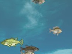 Blackbass Breeding (Aquarium) 2.13 Screenshot