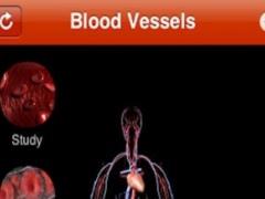 Blood Vessel 1.0 Screenshot